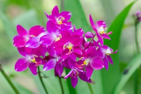 orchidaceae: beautiful Orchidaceae in the garden
