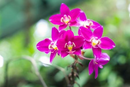 beautiful Orchidaceae in the garden  Stock Photo