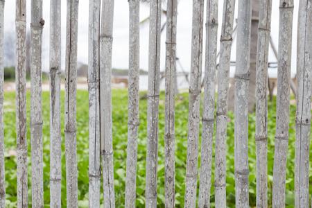stockade: Bamboo fence