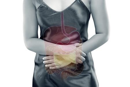 La photo des organes internes est sur le corps de la femme sur fond gris, Viscera on Human Banque d'images