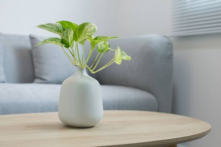 Plants in the white vase on a wooden table Imagens