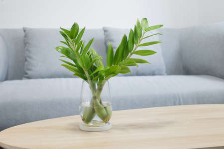 Propagate zz plant or Zamioculcas Zamifoliawith Plant water in living room
