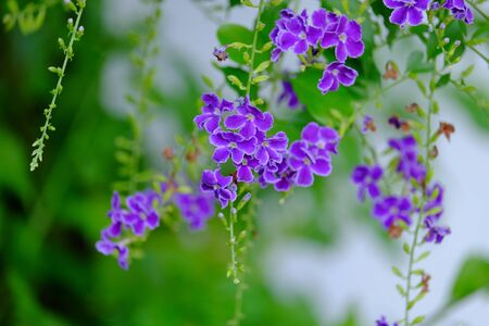 Colorful flowers in nature. Stock Photo
