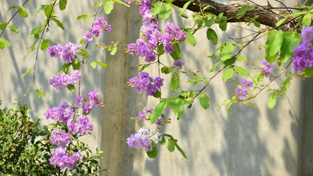 Small purple flowers with a beautiful bush violet flower small purple flowers with a beautiful bush violet flower blossom on its tree in mightylinksfo