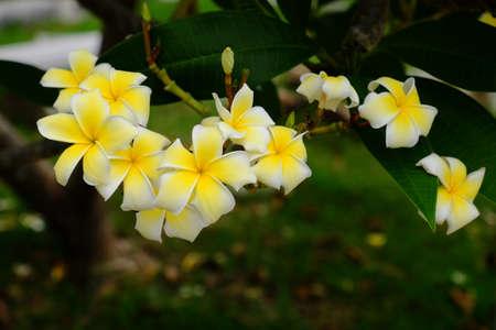 Blooming flowers in spring (summer)