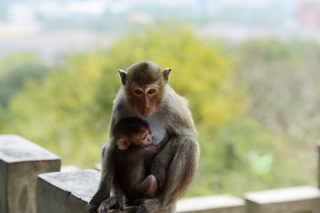 Baby monkey holding onto mother