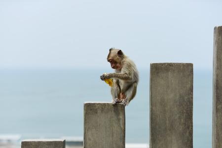 young monkey eating Stock Photo