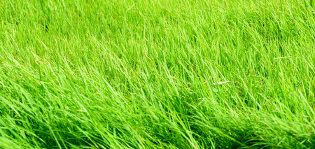 Green meadow with wind blows beautifully. Use as background image. Reklamní fotografie