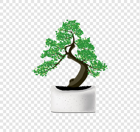 bonsai tree vector on a gray cement pot on transparency background tiny tree and leaves illustration