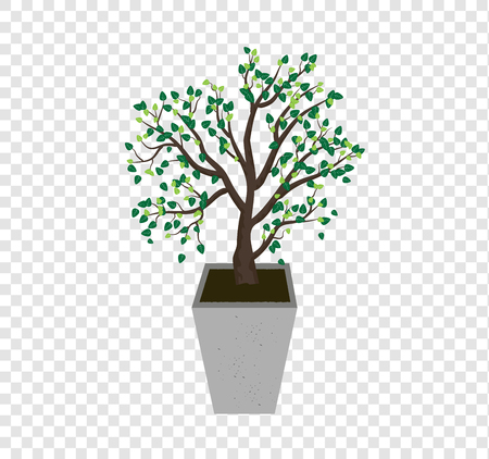 The tree vector spreads the leaves on the tall concrete pots, plant illustration on transparency background Ilustração