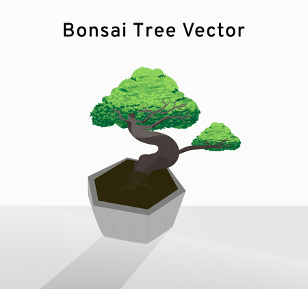 Beautiful bonsai tree vector spreads the leaves on the concrete pot, decorated tiny tree drawing illustration