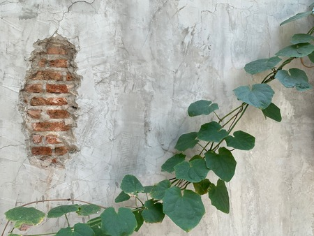 Leaves creeping through cement walls with cracks, abstract art wallpaper and natural background