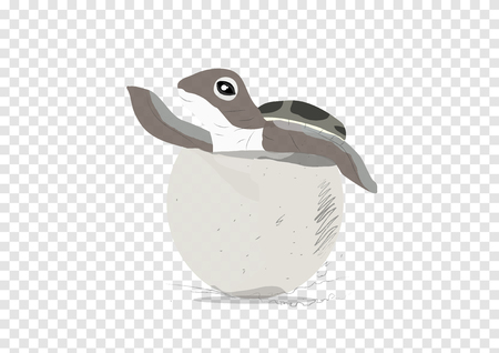 A vector of sea turtle hatch on transparency background, lay and out from egg Illustration