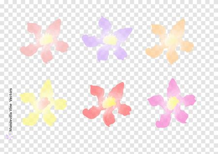 Mandevilla Vine flowers vectors with watercolor brush isolated on trasparency background, beautiful floral element design for decoration