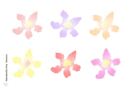 Mandevilla Vine flowers vectors with watercolor brush isolated on white background, beautiful floral element design for decoration