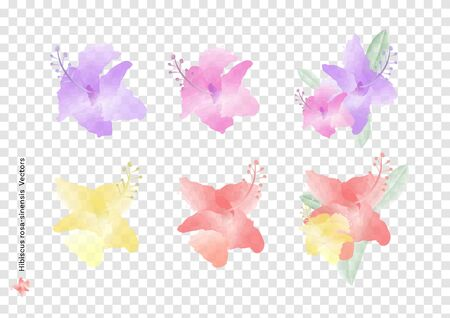 Hibiscus rosa sinensis flowers vectors and leaves with watercolor brush isolated on transparency background, beautiful floral element design for decoration