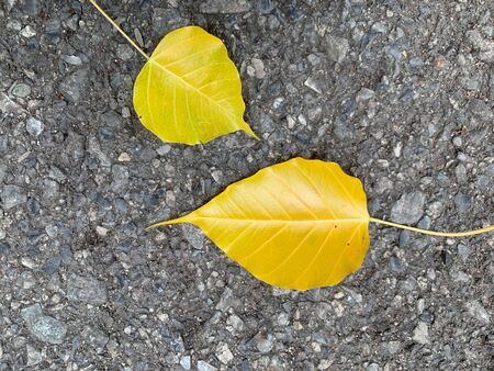 Abstract autumn leaves Yellow leaves spread on the cement floor background
