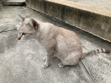 The near photo of a gray cat is sitting looking forward, looking for prey