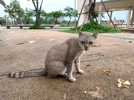Gray cat is sitting on the floor in the park