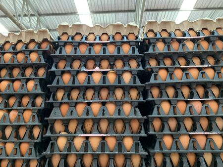 Organic Fresh chicken eggs placed in a panel Reklamní fotografie