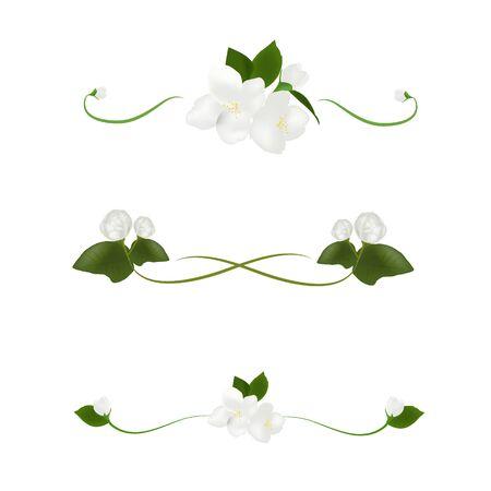 Beautiful white jasmine flower vector on white background, illustration for decorating text frames, element floral design for banner or wedding invitation card, mother day flower