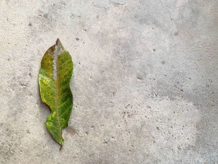 The green leaves are drying out on the cement floor like a degenerative disease
