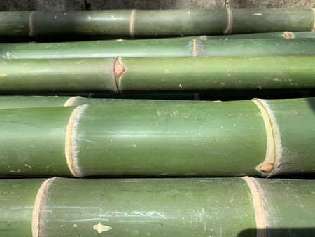 The focus image of green bamboo segment as abstract background