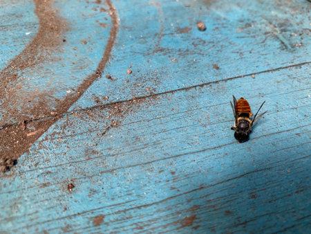 Bees on vintage blue wood background