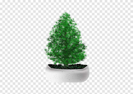 Merry christmas pine tree in mable pot vector on transparency background