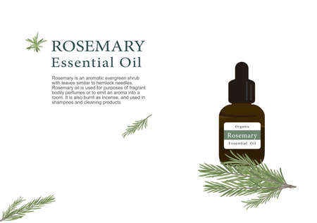 rosemary herb for essential oil extraction in medical treatment vector