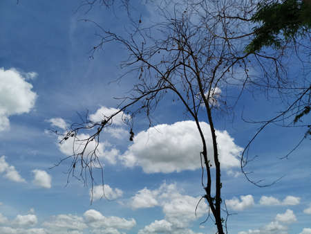 dead tree on the blue sky with cloud as abstract background 写真素材