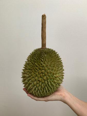 Durian fruit long stalk on hand on white background 写真素材