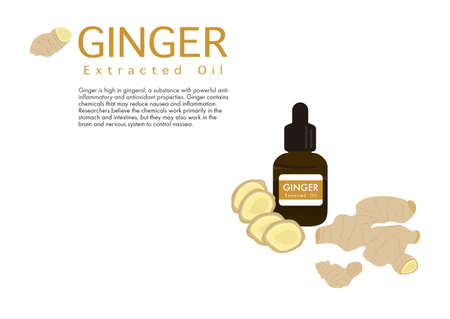 ginger herb for extracted oil in medical treatment vector isolated on white background ep04  イラスト・ベクター素材