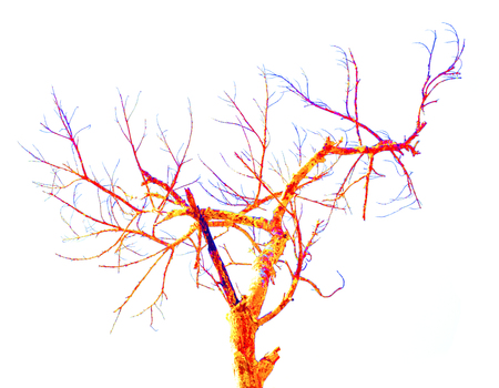 multi color: Multi color of dry tree isolated on white background. Stock Photo