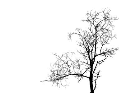 depressive: black tree silhouette isolated on white background