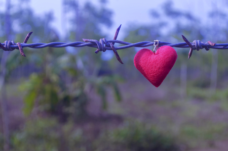 barbed wire fence: Heart stick on barbed wire, Symbol of love, vintage tone color. Stock Photo