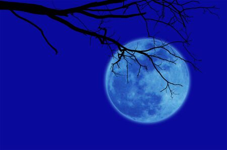 alone in the dark: Silhouetted black dry tree branch  on blue background with blurred full moon on sky. Stock Photo