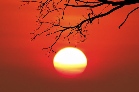 Silhouetted black dry tree branch on blurred big sunrise background.
