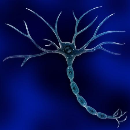 mente humana: Neurona celular