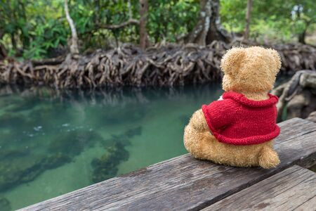 Teddy bear sitting on a bridge near the natural canal. The clear green stream flows through the mangrove forest root. In the midst of the shady and beautiful nature. Tha Pom Klong Song Nam beautiful and famous tourist destination in Krabi, Thailand.