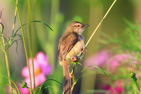 a little brown bird is working on flowers in garden