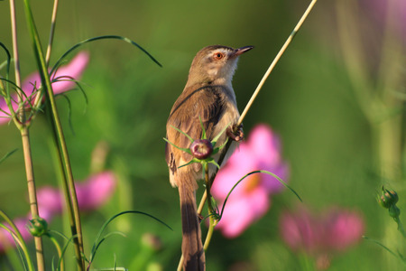 a little brown bird is working on flowers in garden