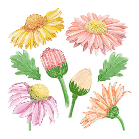 Set of watercolor painted winter flower clipart. Hand drawn isolated on white background. Иллюстрация