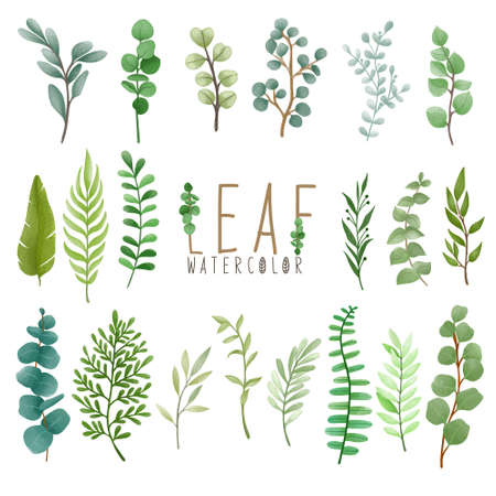 Set of watercolor painted Leaf, Green leaves clipart. Hand drawn isolated on white background.