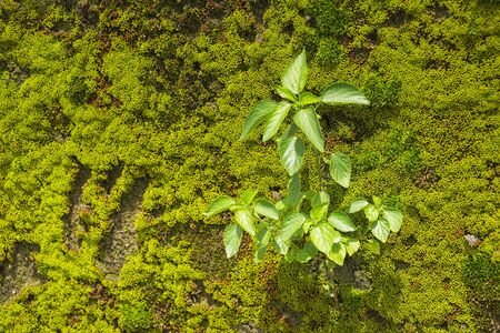 abstract green moss on wall background