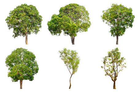 Tree collection set isolated on white background Stock Photo