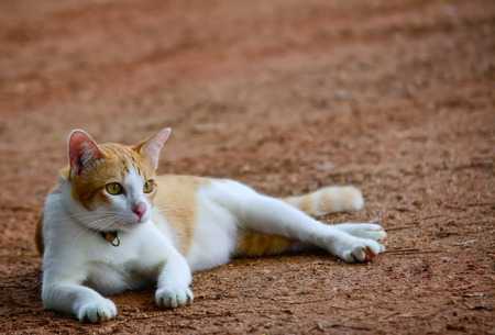 sitting on the ground: orange and white color  cat is  sitting and looking something on ground