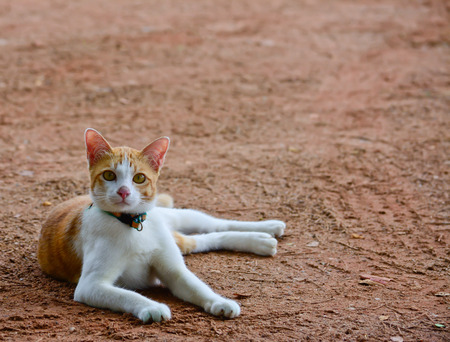 sitting on the ground: orange and white color  cat is  sitting and looking camera on ground