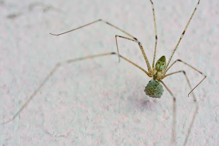 chitin: macro of spider