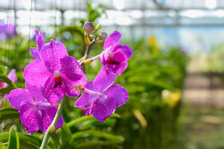 Orchid hanging in plant nursery. with soft filter and blur background photo